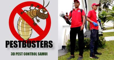 3D Pest Control Samui - Entreprise de désinsectisation, dératisation et désinfection a Koh Samui (Thaïlande)